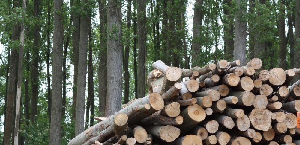 European Biomass to Power