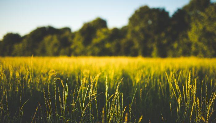 biomass support threaten clean energy transition